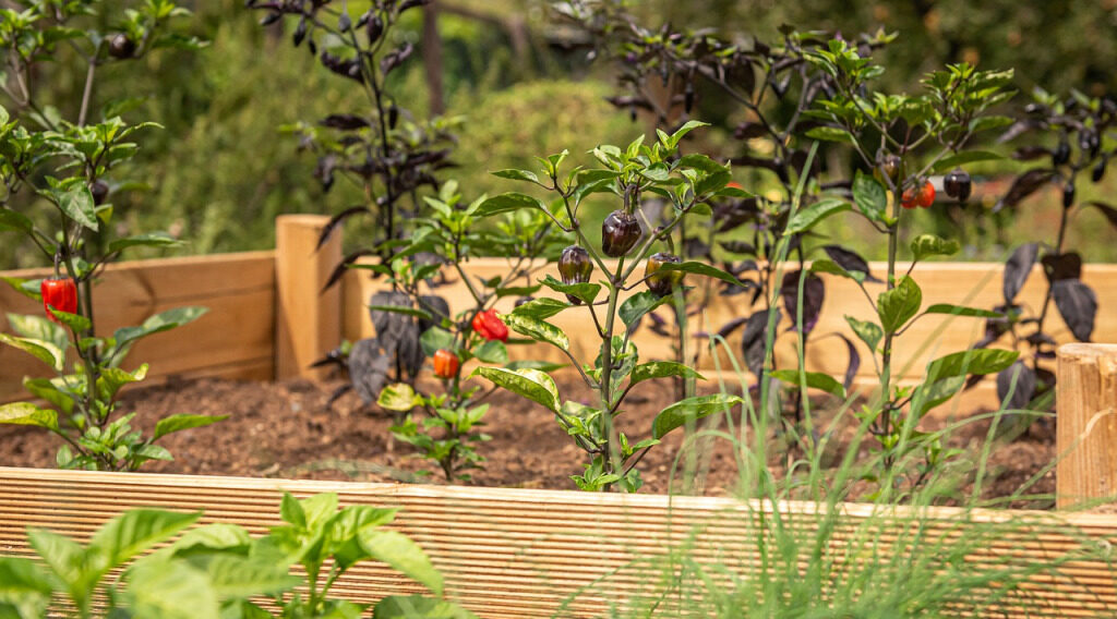 ARE RAISED BEDS, CONTAINERS, OR THE GROUND BETTER?