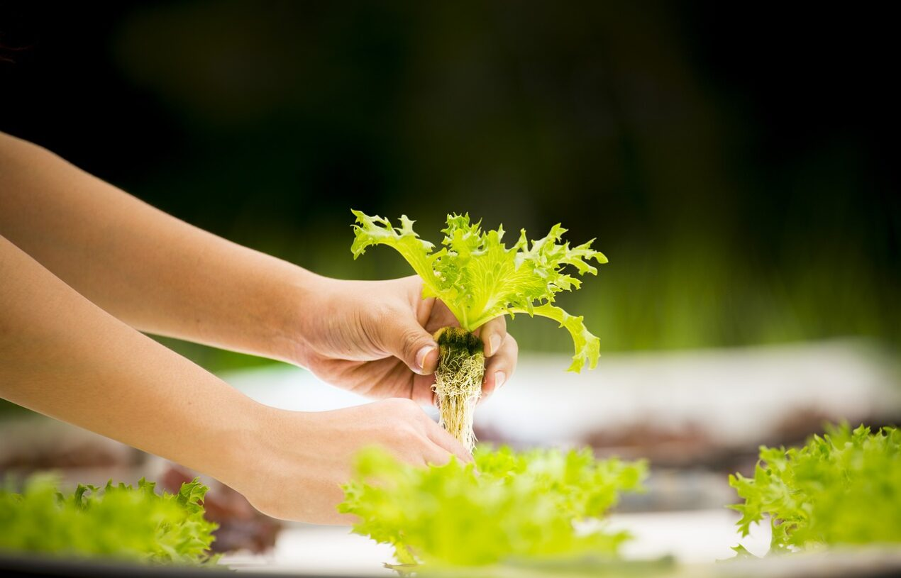 EBB AND FLOW HYDROPONICS: HOW TO GET STARTED