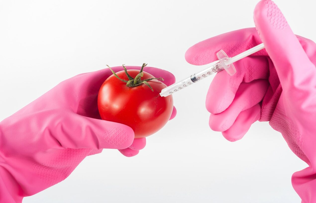 WHAT IS GMO FOOD AND IS IT DANGEROUS?