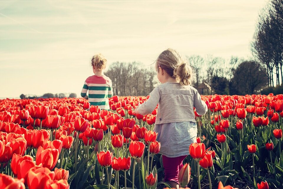 GROWING TULIPS: A QUICK GUIDE