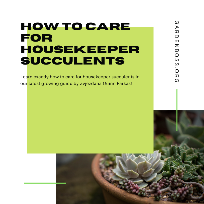 CARING FOR HOUSEKEEPER SUCCULENTS: QUICK GUIDE