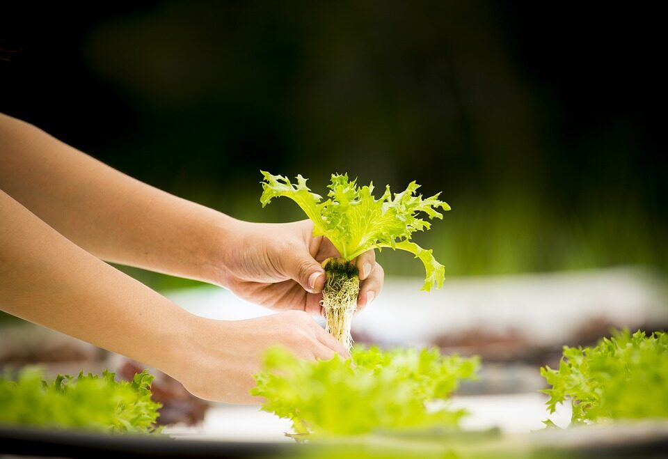 THE HYDROPONIC GARDENING AT HOME GUIDE